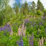 Finnish summer — Stock Photo #48028165