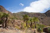 Gran Canaria, Caldera de Bandama — Stock Photo