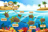 Life cycle of the sea turtle — Stock Vector