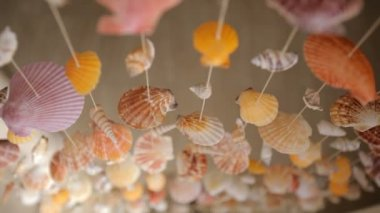 Curtains of mollusk shells — Stock Video