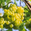Grapes — Stock Photo #37601587