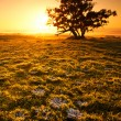 ������, ������: Orange Sunrise Field