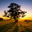 Meadow Dawn — Stock Photo