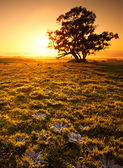 Orange Sunrise Field — Stock Photo