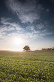 Farmland — Stock Photo