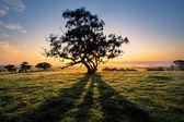 Tree Shadows — Stock Photo