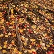 Autumn Roots - Stock Photo