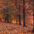 Stock Photo: Autumn Stroll