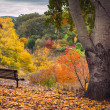 Autumn View — Foto de Stock