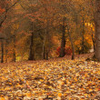 Autumn Panorama 2 - Stockfoto