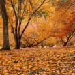 herbst panorama — Stockfoto