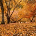 höstens panorama — Stockfoto