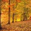Foto de Stock  : Autumn Stroll
