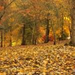 höstens panorama 2 — Stockfoto