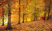 Autumn Stroll — Stock Photo