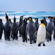 King Penguins — Stock Photo #31592603