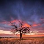 Gnarly Tree — Stock Photo
