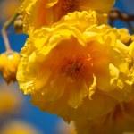 Tropical yellow flower — Stock Photo