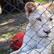 Lion cub behind his cage in the zoo — Stock Photo #13470259