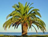 海海岸ビーチでヤシの木 — ストック写真