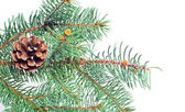 Evergreen fir and cone christmas isolated on whitebackground — Stock Photo