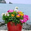 Flower pot with sea in background — Stock Photo