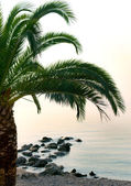 Palm tree by the sea shore beach — Stock Photo