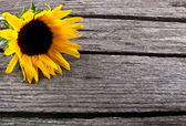 Beautiful sunflower yellow flower on wooden background — Stock Photo