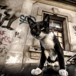 Cat on the car and street graffiti on old wall grunge effect — Stock Photo