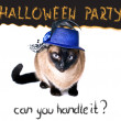 Halloween party banner funny edgy jumpy Siamese Hilarious Humor Cat — Zdjęcie stockowe