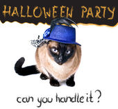 Halloween party banner funny edgy jumpy Siamese Hilarious Humor Cat — Foto de Stock