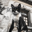 Cat on the car and street graffiti on old wall grunge effect — Stock Photo #44148463