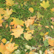 Autumn leaves on the grass — Stock Photo