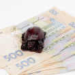 Ukrainian money and turtle figurine - Stock Photo