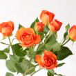 Valentines Day Roses — Stock Photo