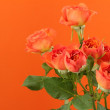 Tender natural roses — Stock Photo