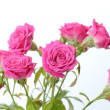 Pink roses bouquet — Stock Photo #21534421
