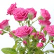 Pink roses bouquet — Stock Photo #21534433