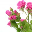 Pink roses bouquet - Stock Photo