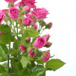 Pink roses bouquet — Stock Photo #21534479