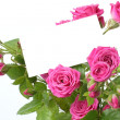 Greeting card with roses — Lizenzfreies Foto