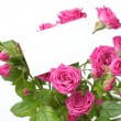 Greeting card with roses — Stockfoto