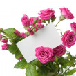 Greeting card with roses — 图库照片