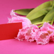 Pink tulips with a congratulatory card - Stok fotoğraf