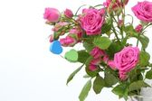A bunch of pink roses — Stock Photo