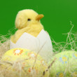 Ester chicken and color eggs — Stock Photo