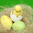 Ester chicken and color eggs - Stock Photo
