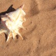 Seashell on sand — Stock Photo