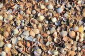 Seashells on sand — Stock Photo