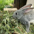 Beautiful little rabbit sitting in the grass outdoors — Stockfoto